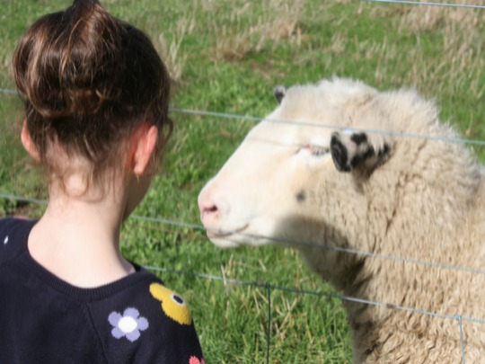 Earn your Little Farmer Certificate and enjoy the sights and sounds of the farm!